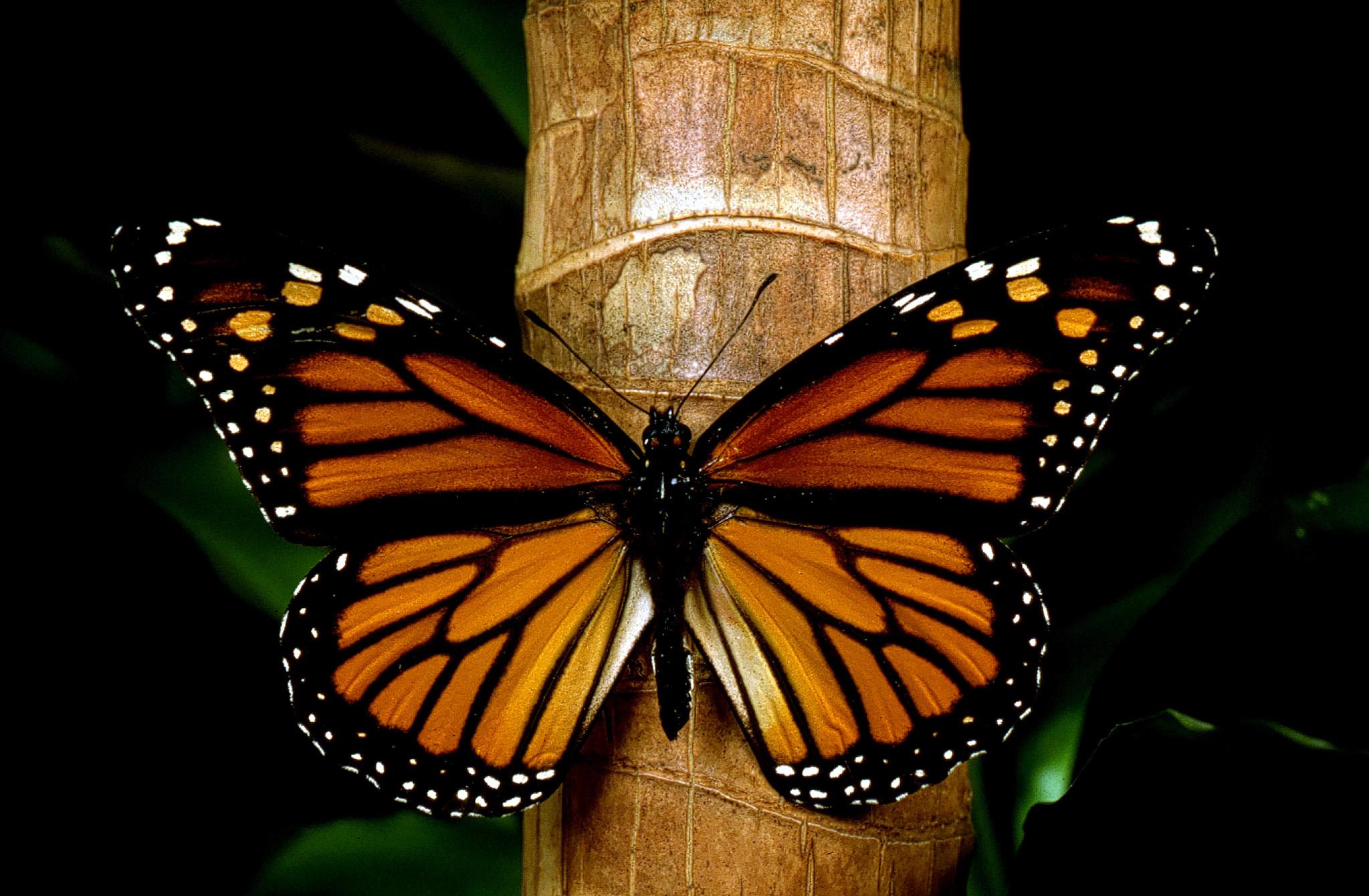 Los mejores santuarios para disfrutar de la mariposa - Mariposas en la pared ...