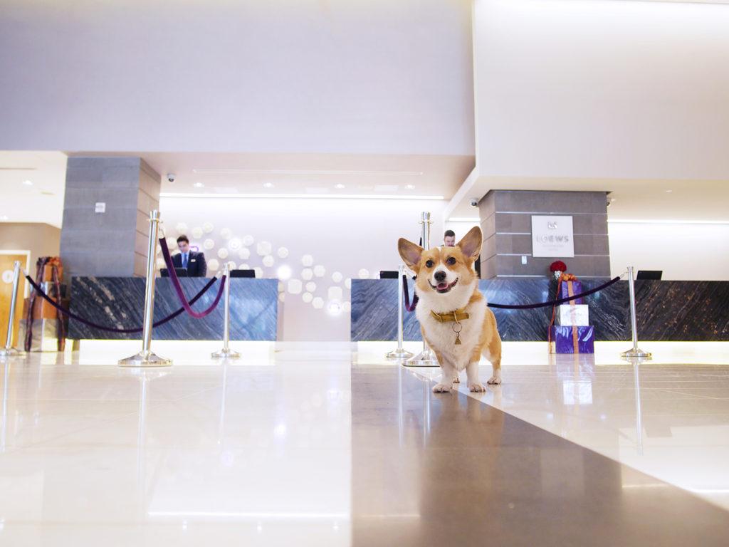 Descubre la ciudad más pet friendly de América