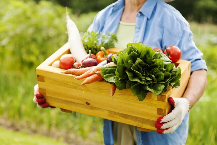 alimentos orgánicos: uno al día